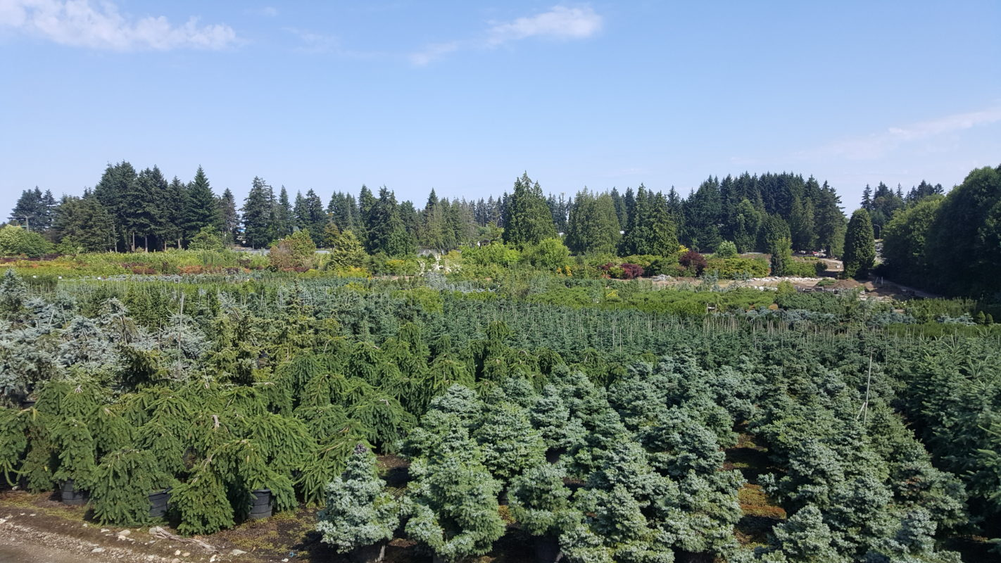 News About Green Thumb Garden Centre, Green Thumb Nurseries And The  Property We Are Located On - News About Green Thumb Garden Centre, Green Thumb Nurseries And The